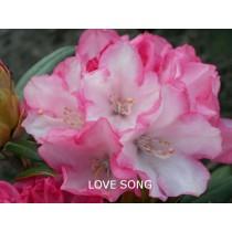 yak Love Song hybrid