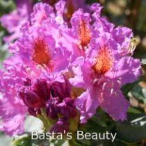 Basta's Beauty